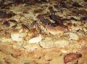 Torta tedesca rabarbaro
