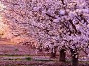 Ricetta primavera