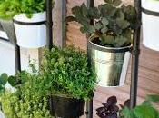Dopo quella delle fragole ecco colonne altre piante aromatiche sull'orterrazzo