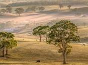 """Lavorare Australia: come trovare posto """"farm"""""""