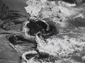 Edward Weston, corpo linea Torino