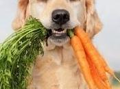 Dieta vegana cane