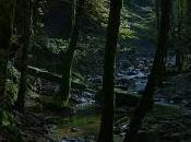 fanciulla bosco