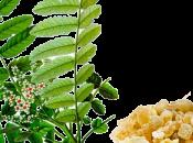 Boswellia serrata Incenso come antinfiammatorio naturale!