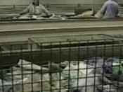 Napoli Sequestro rifiuti speciali verso Cina (11.04.11)