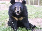 firmate petizione bloccare torture agli orsi della luna