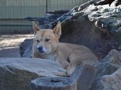 animali australiani: scopriamoli insieme