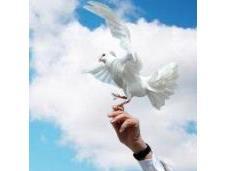 Giornata Mondiale Preghiera Cura Creato 2016