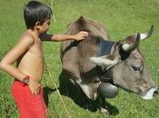 presento bimba, nostra mucca adozione