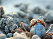 suggerimenti fotografia naturalistica marina