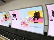 Nella metropolitana Londra gatti diventano delle vere proprie star