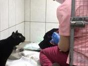 zampe paralizzate, micio-infermiere prende cura degli altri animali ricoverati