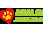 Sabato settembre. Apericena vegan solidale gatti AZALEA
