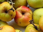 Strudel alle mele senza uova burro