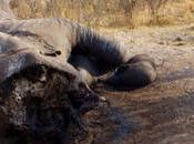 grande Censimento sugli Elefanti tutta l'Africa, Namibia partecipa