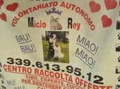Micio Rey, cuccioli salvare!
