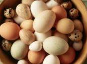 Perché uova gallina hanno colori diversi?