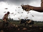 Terra Trema: buono bello dell'agricoltura