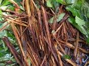 Ayahuasca pianta sacra