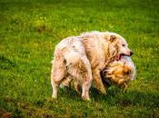 Quanto imparare l'uomo dalle interazioni cani? Ecco come cani risolvono pacificamente conflitti.
