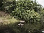 Foreste piedi alla tutela ettari foresta nell'Amazzonia brasiliana.