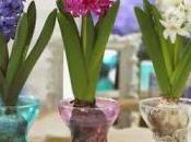 fiore amato Apollo: Giacinto