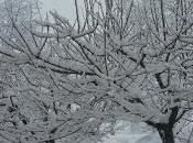 spasso sotto neve!
