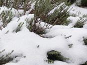 giardino nella neve…