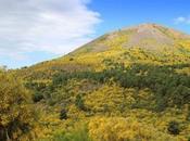 Vesuvio MountainBike Race: gara ciclismo vulcano bello mondo