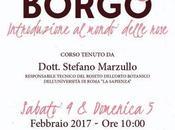 Rose Borgo, febbraio Roma