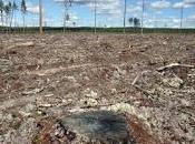 Olio palma, Greenpeace chiede Banca HSBC finanziare distruzione delle foreste indonesine
