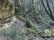 """bosco """"roccioso"""" Tarquinia"""