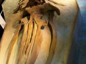 Scoprite, Museo Paleontologico, l'epoca Asti c'erano balene!