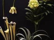 fiori carta cobra lily