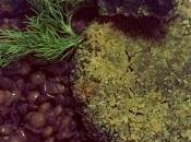 Medaglioni erbe selvatiche insalata lenticchie all'olio zucca crudo