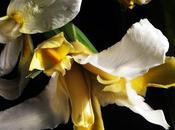 mito profumi: Iris #seguilestagioni
