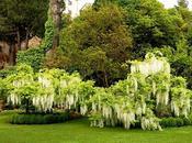 Vita segreta delle piante: annusano, comunicano, cantano sono pure altruiste