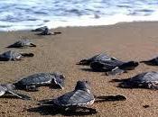 Segni speranza tartarughe marine