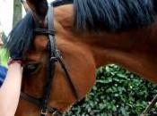 Prima cavallo, caccia olimpici