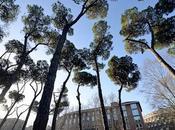 bosco Roma