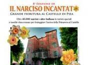 Anche quest'anno, Castello Piea sboccia Narciso Incantato'