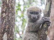 Taste Madagascar