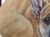 Sassi dipinti cani Ritratti realistici pietra