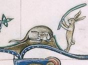 Conigli killer Quando preda diventa cacciatore