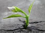 """Evoluzioni personali: troppo tardi """"crescere""""…"""