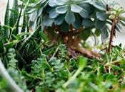 Concime Profumato Universale VerdeVivo, bene alle piante regala piacevoli profumazioni