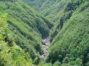Viaggio alla scoperta Parco dell'Aveto probabilmente bello della Liguria.