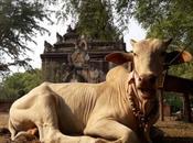 fuga Bagan, sito archeologico peggio restaurato della Birmania!