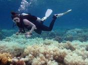 Australia: Barriera Corallina sempre bianca!
