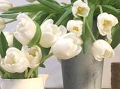 Tulipani composizioni floreali